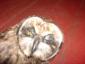 TeleTanya аватар